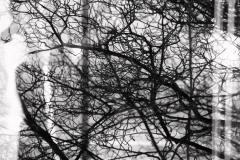 Self-portrait with tree
